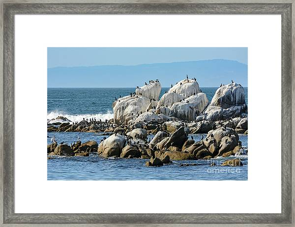 A Crowded Bird Rock Framed Print
