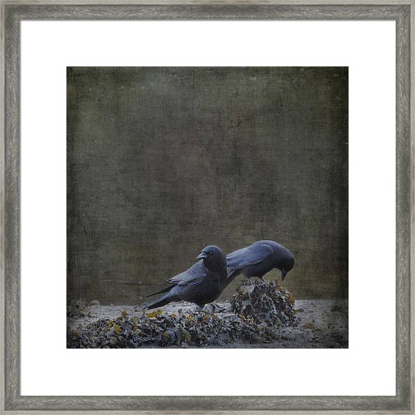 Blackbirds At The Beach Framed Print