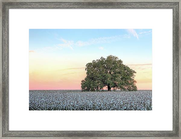 A Deeply Southern Sunrise Framed Print