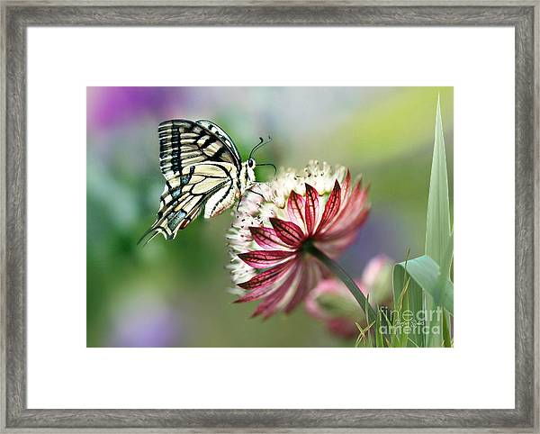 A Delicate Touch Framed Print