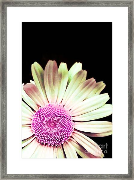 A Different Shade Of Michaelmas Framed Print