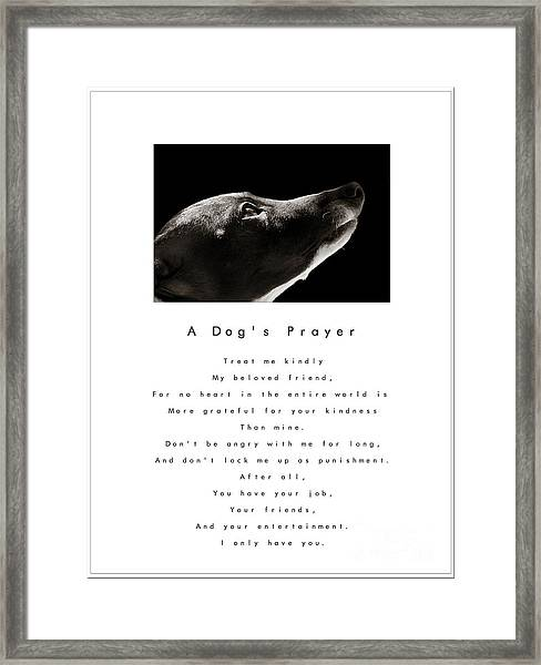 A Dog's Prayer In White  A Popular Inspirational Portrait And Poem Featuring An Italian Greyhound Framed Print