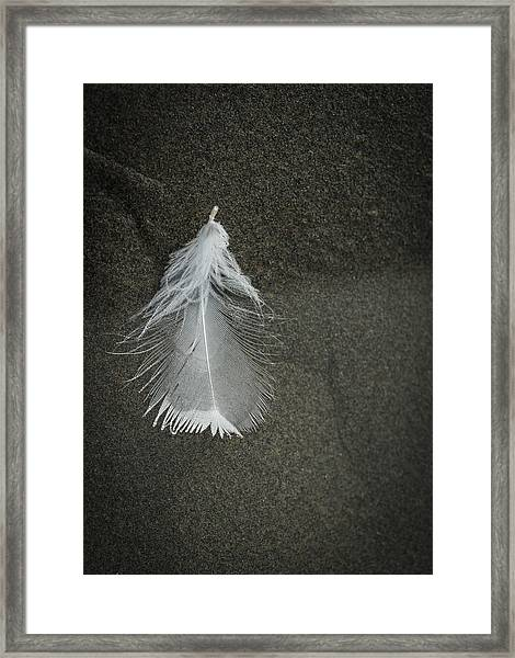 A Feather At The Edge Of The Water Framed Print