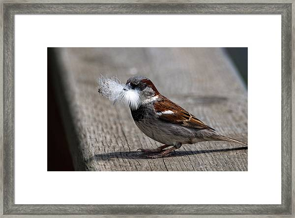 A Feather For The Nest Framed Print