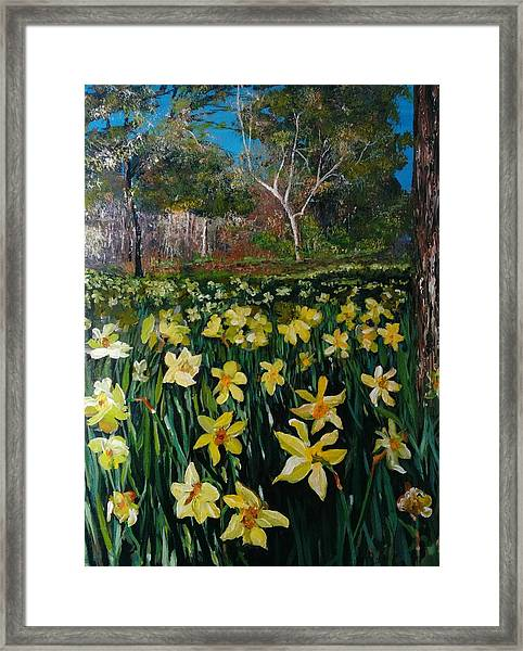 Framed Print featuring the painting A Field Of Daffodils by Ray Khalife
