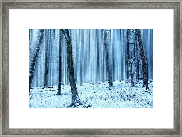A Forest In Winter Framed Print