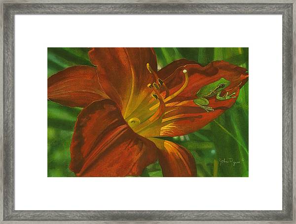 A Frog On A Lily Framed Print