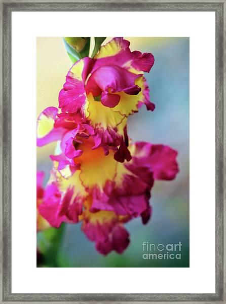 A Gladiolus 3 Framed Print