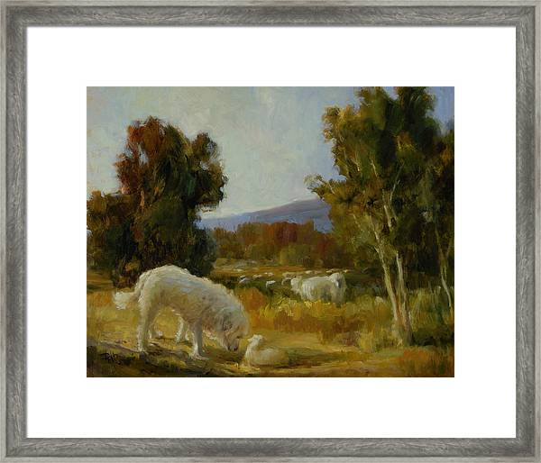 A Great Pyrenees With A Lamb Framed Print