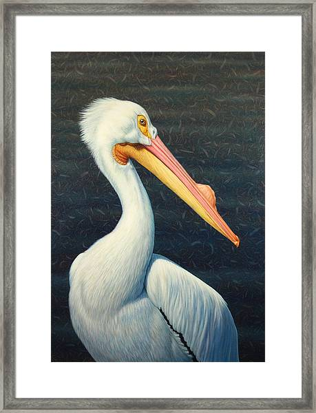 A Great White American Pelican Framed Print