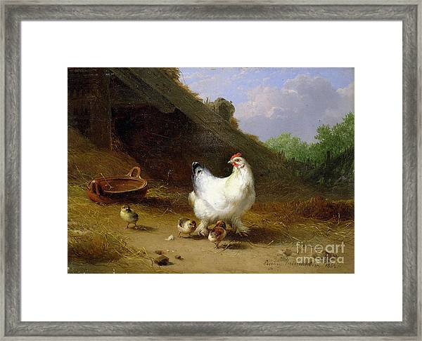 A Hen With Her Chicks Framed Print