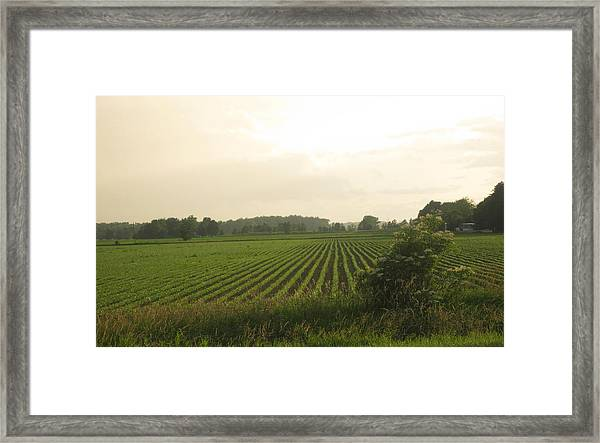 A Hint Of Tuscany Framed Print by Patrick Murphy