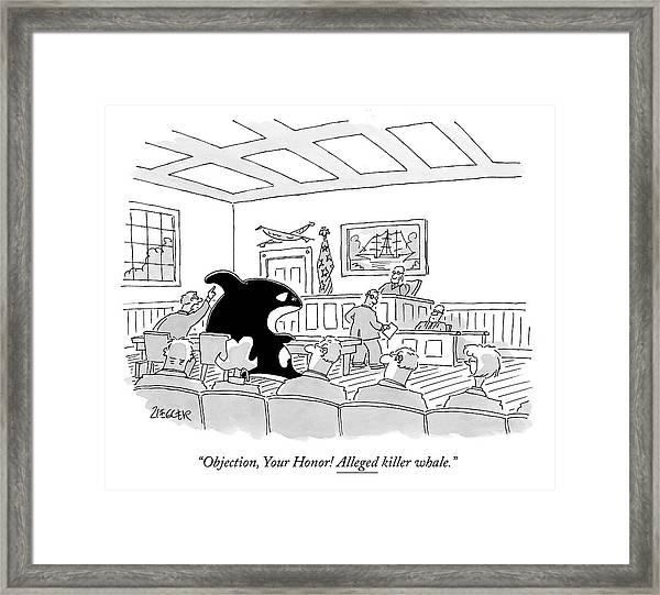 A Killer Whale Is In Court Framed Print
