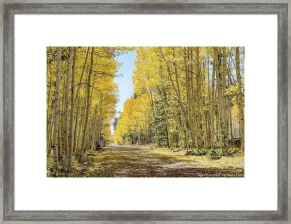 A Lane Of Gold Framed Print