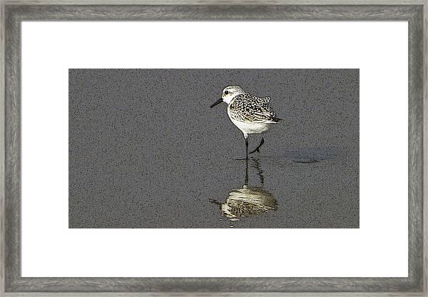 A Little Bird On A Beach Framed Print