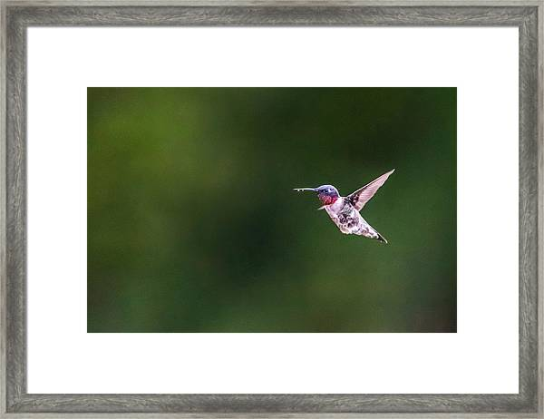 A Little Something On The Chin Framed Print