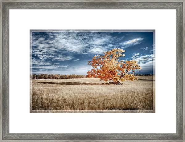 A Lone Tree Framed Print