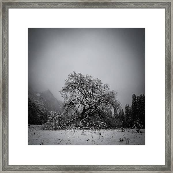 A Magic Tree Framed Print