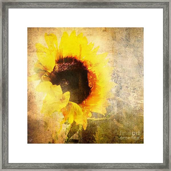 A Memory Of Summer Framed Print