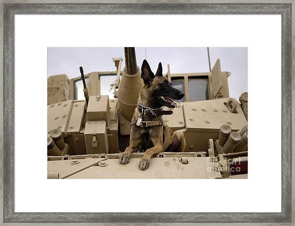 A Military Working Dog Sits On A U.s Framed Print