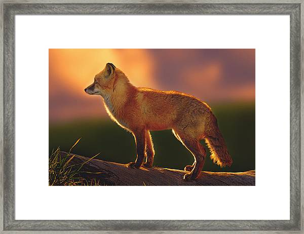 A New Day Dawning  Framed Print