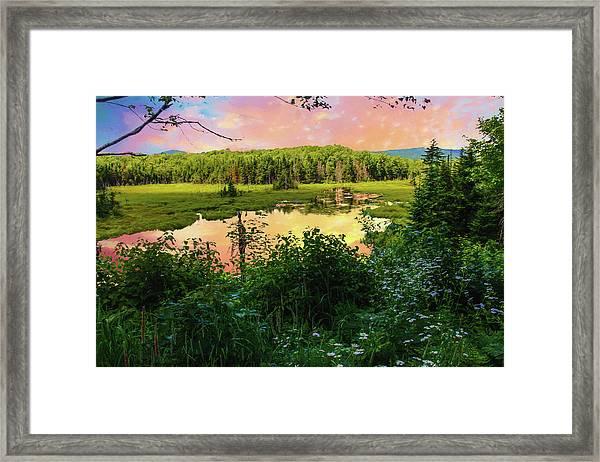A New England Bog. Framed Print