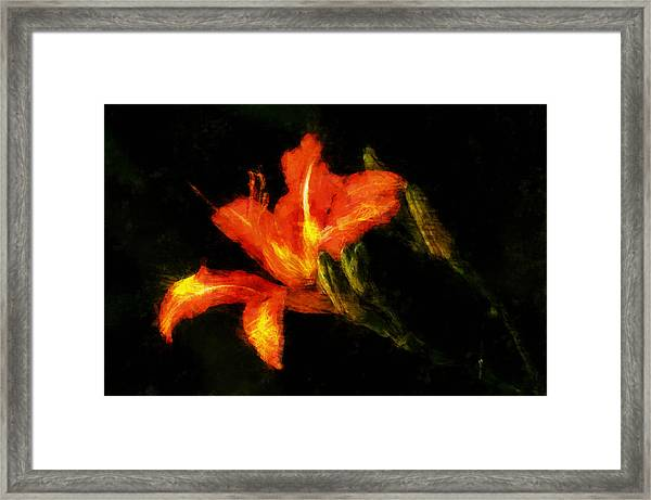 A Painted Lily Framed Print