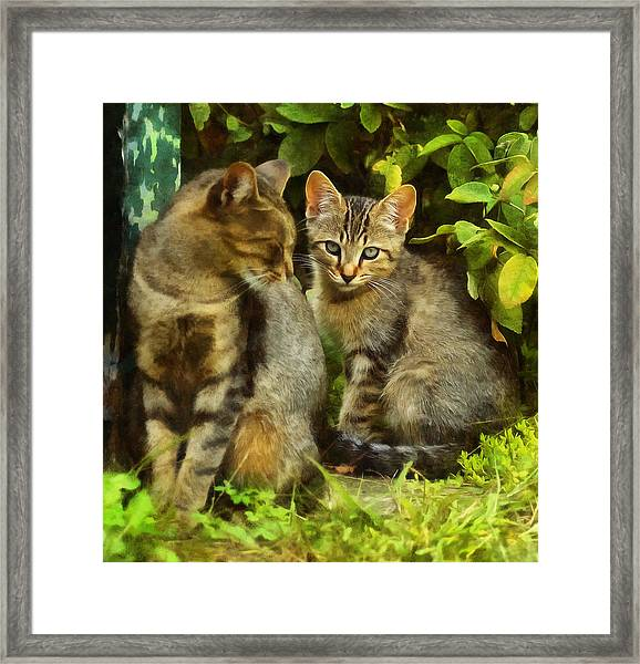A Pair Of Feral Cats Framed Print