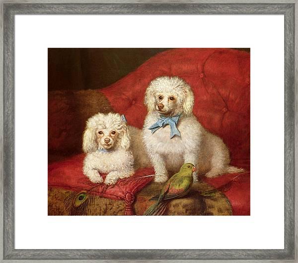 A Pair Of Poodles Framed Print
