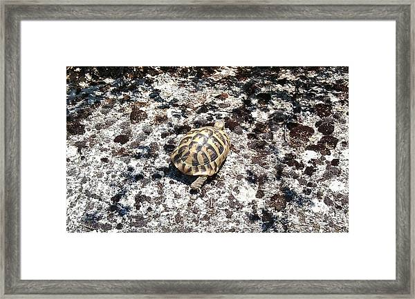 A Pal We Found In Greece Framed Print