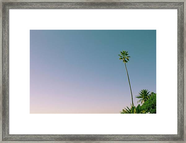 Framed Print featuring the photograph A Palm On Its Own by Matthew Wolf