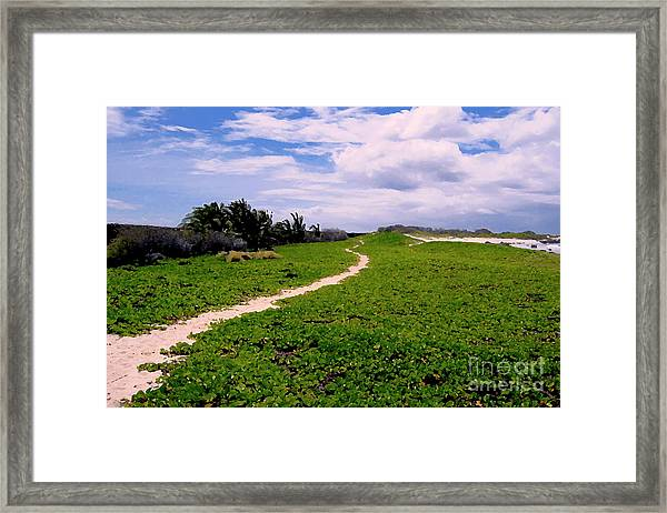 A Path Thru The Dunes Framed Print