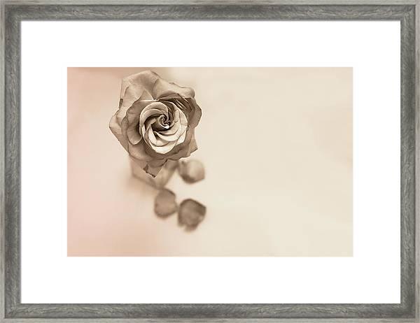 A Petal Falls Framed Print