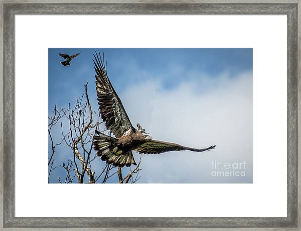 A Piggyback Ride Framed Print