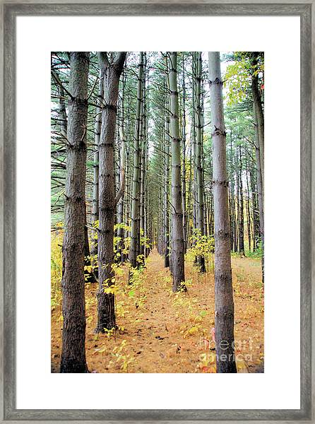 A Pines Army Framed Print