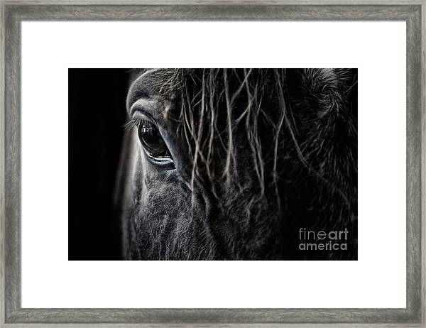 A Race Horse Named Tikki Framed Print