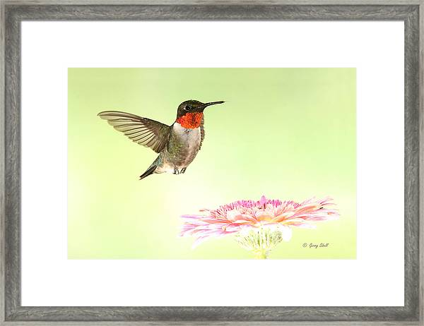 A Ruby's Dream Flower Framed Print