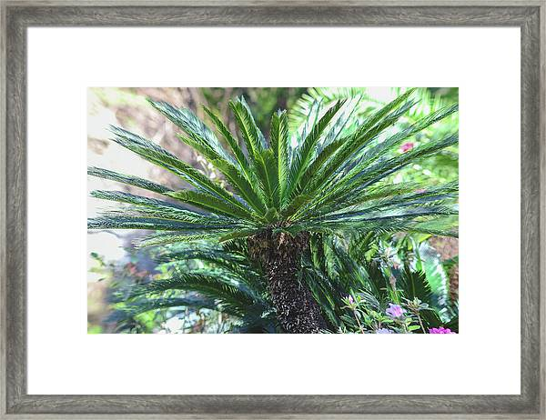 A Shady Palm Tree Framed Print