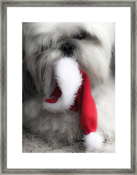 A Shih Tzu Christmas Framed Print