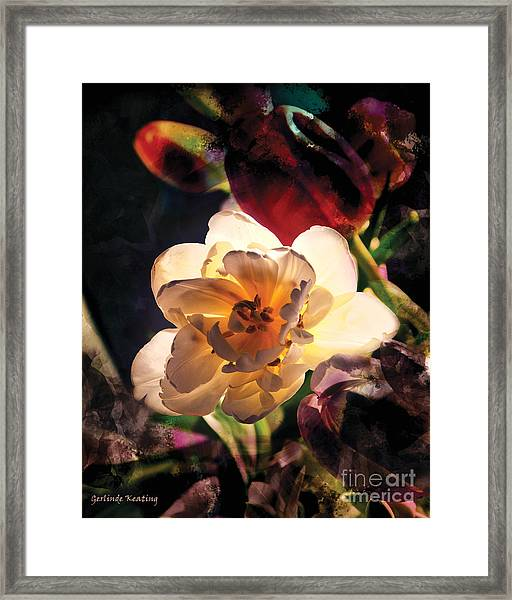 A Shining Beauty Framed Print