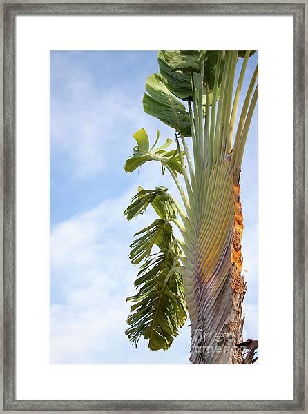 A Slice Of Nature Framed Print