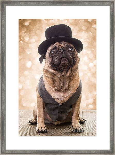 Framed Print featuring the photograph A Star Is Born - Dog Groom by Edward Fielding