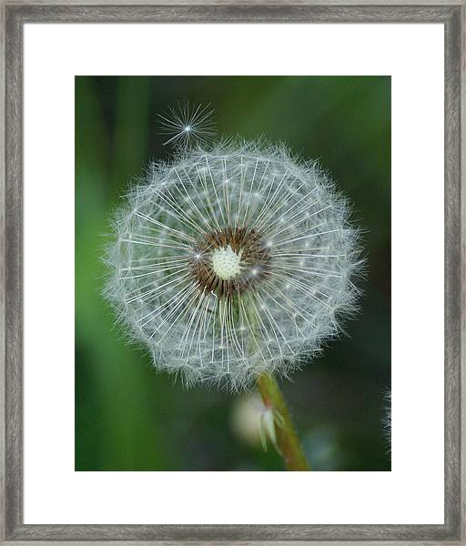 A Star Leaves Home Framed Print
