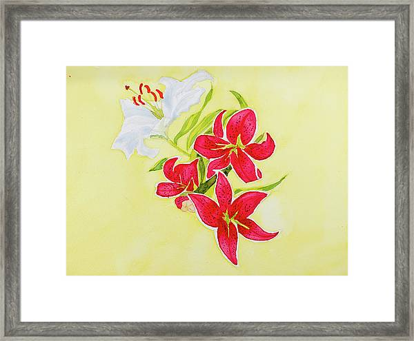 A Study Of Lilies Framed Print