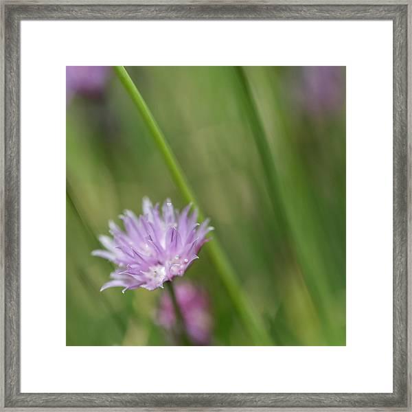 A Taste Of Spring Framed Print