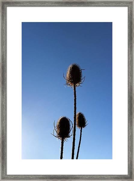 A Thriving Trio 2 Framed Print