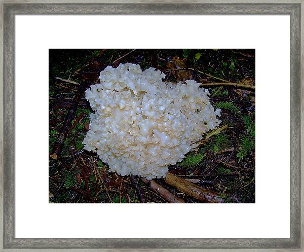 A Touch Of Gold Framed Print by Angi Parks