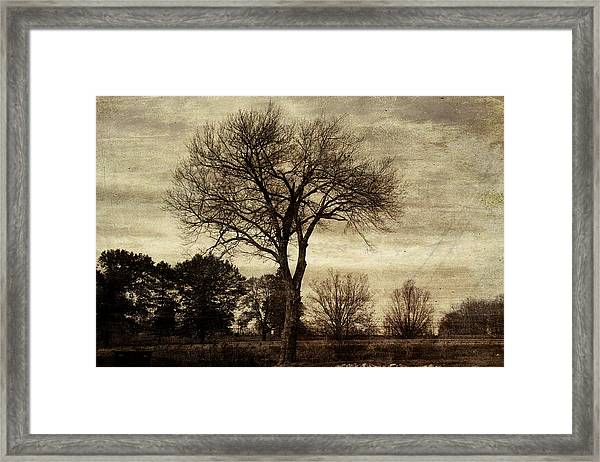 A Tree Along The Roadside Framed Print