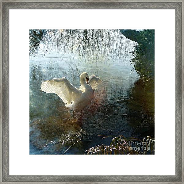 A Very Fine Swan Indeed Framed Print