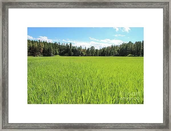 Framed Print featuring the photograph A Very Green Meadow by Bill Gabbert
